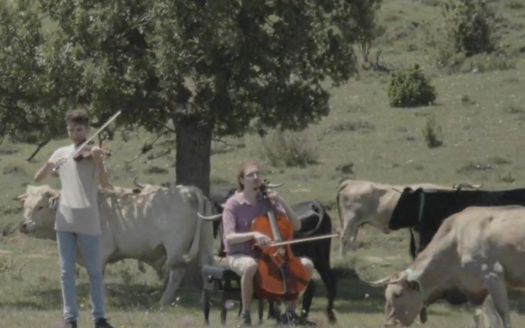 El primer trabajo colaborativo, con vacas